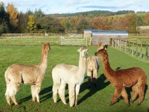 The new girls at Beck Brow