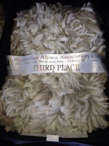 Fleece of Kurrawa Legend's Crusader at the AAA National Fleece Show