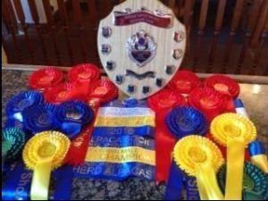 British Alpaca Society National show 2016 - Beck Brow Team winnings!