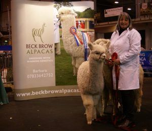 Beck Brow Explorer's Championship winning progeny group. The image of their sire at the same age.